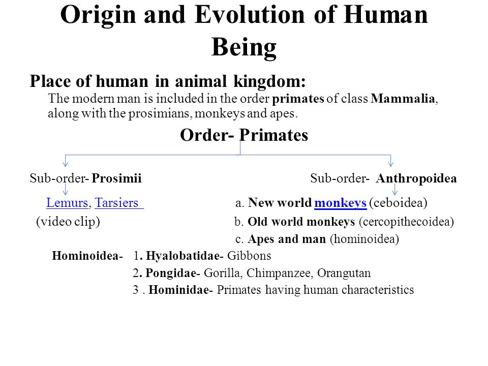 origins and evolution of the human A short history of human rights the belief that everyone, by virtue of her or his humanity, is entitled to certain human rights is fairly new.