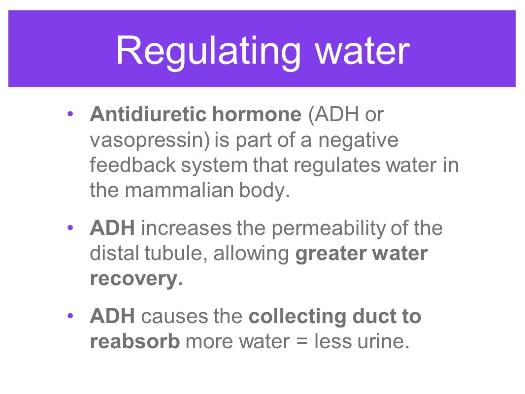 the importance of antidiuretic hormone in Antidiuretic hormone (adh) is produced by an area of the brain called the hypothalamus adh controls how your body releases and conserves water.
