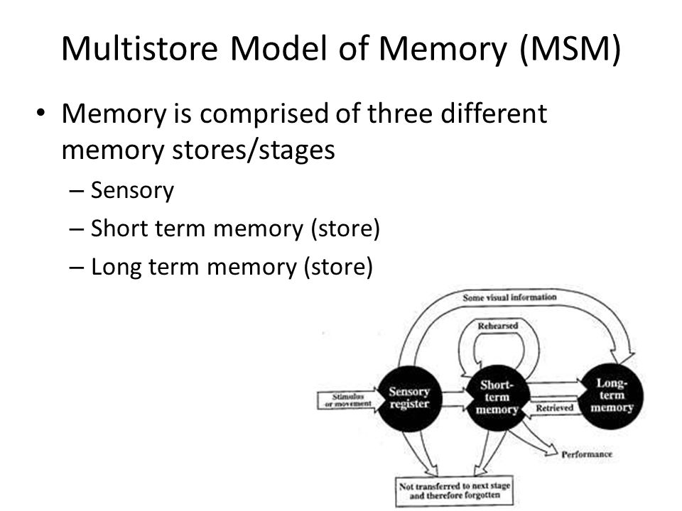 evaluation of two models of memory essay Writing a 'describe and evaluate a theory' essay recall that an essay is assessed on two main mental model of the world constructed from the clues our.