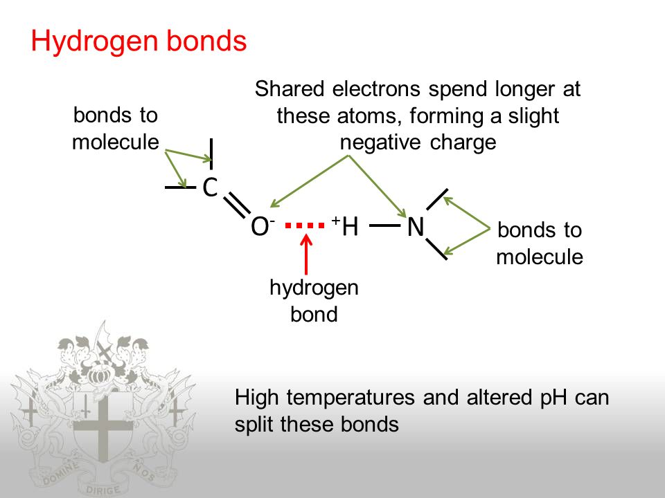 how to tell if a molecule can hydrogen bond