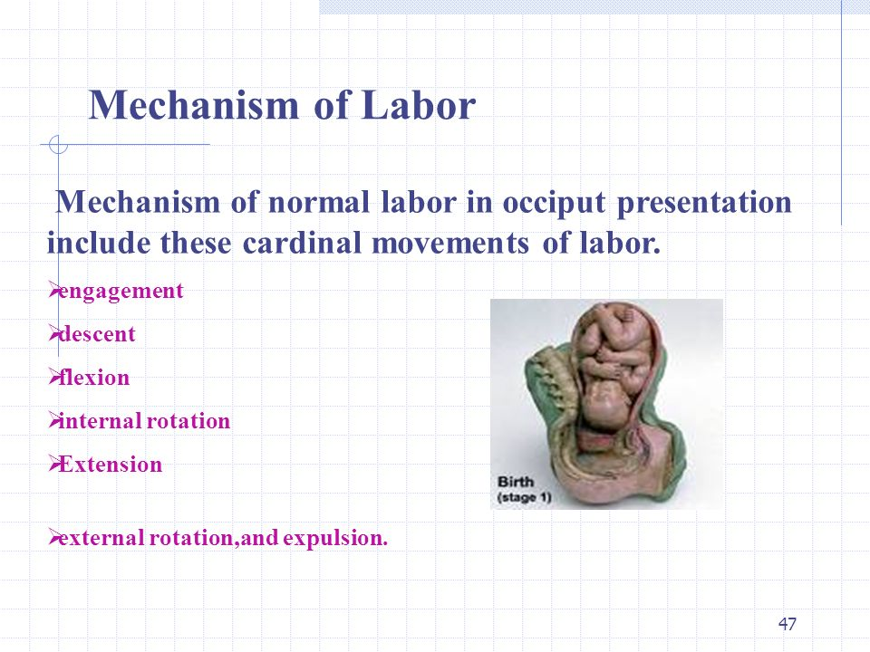 mechanism of labor and delivery