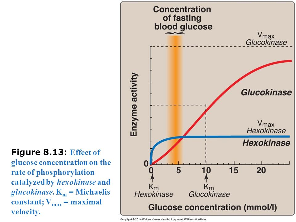 how different concentrations of glucose effects Do you really want to delete this prezi the effects of different concentrations of sugar on the change in mass of potatoes and apples graph conclusion from.