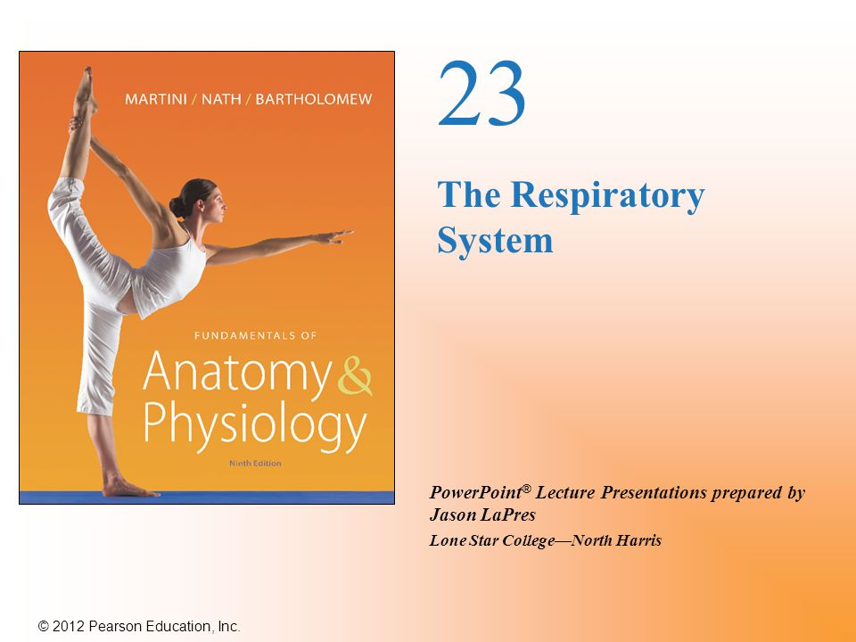 an introduction to the respiratory system This is an overview of the respiratory system avoid resits and achieve higher grades with the best study notes written by your fellow students.