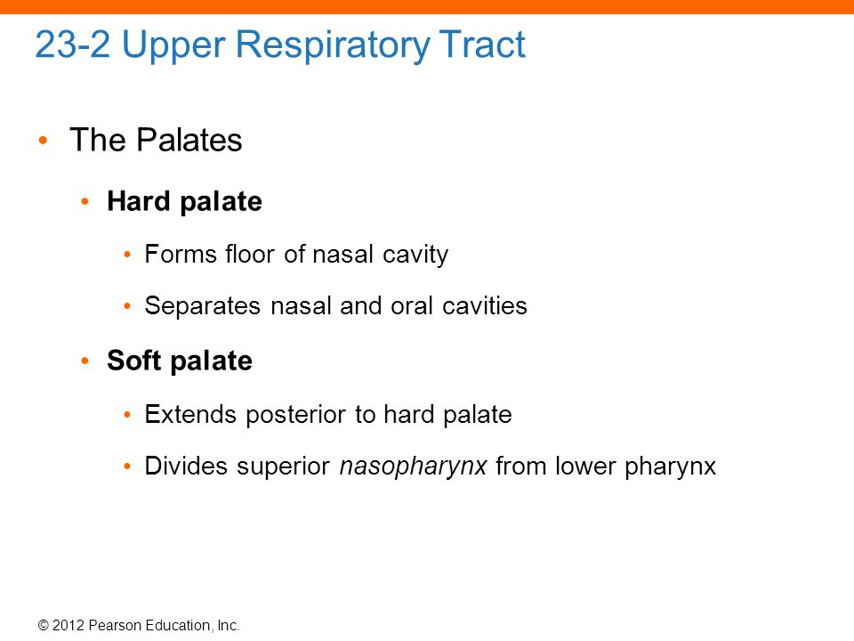 23 the respiratory system ppt download for Floor of nasal cavity