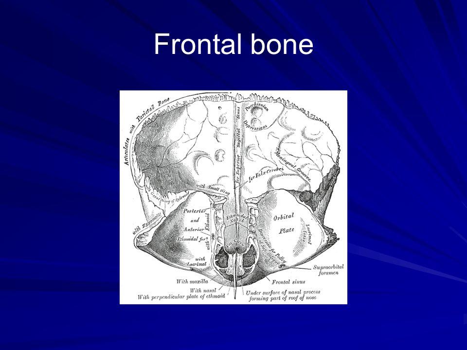 Bones Of Skull And Cranial Cavity Ppt Video Online Download