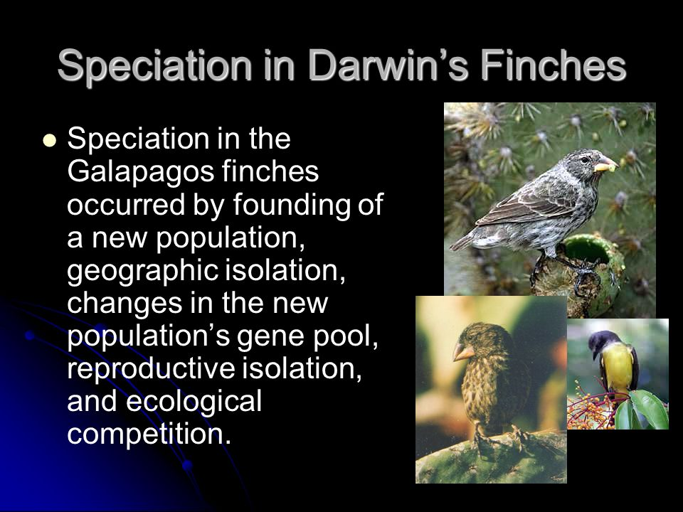 australias geographic isolation breeds unique flora and fauna Many breeds of native flora and fauna have  and woodcuts that were often still-lifes of australian flora and fauna 5:  isolation, and its unique.