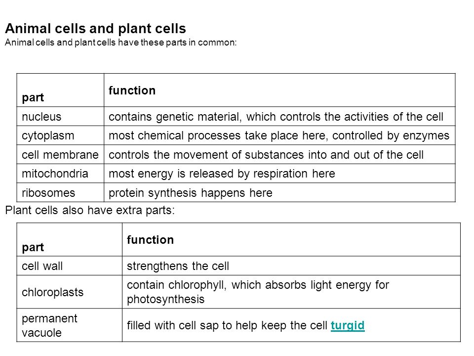 Biology ppt download animal cells and plant cells ccuart Gallery