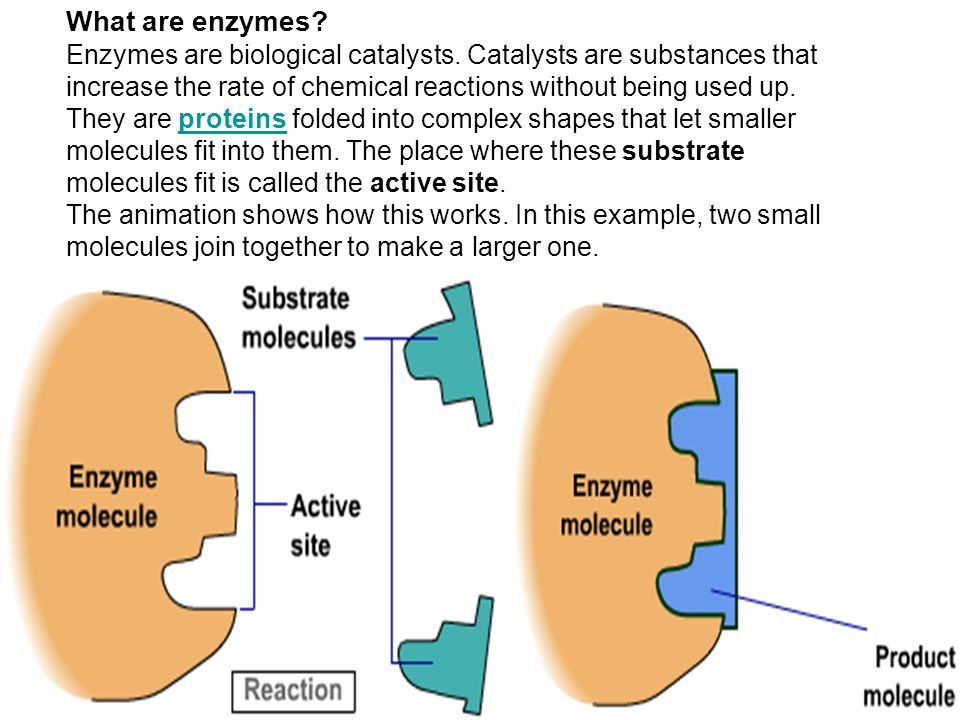 Enzyme Reactions Worksheet Answers 009 - Enzyme Reactions Worksheet Answers