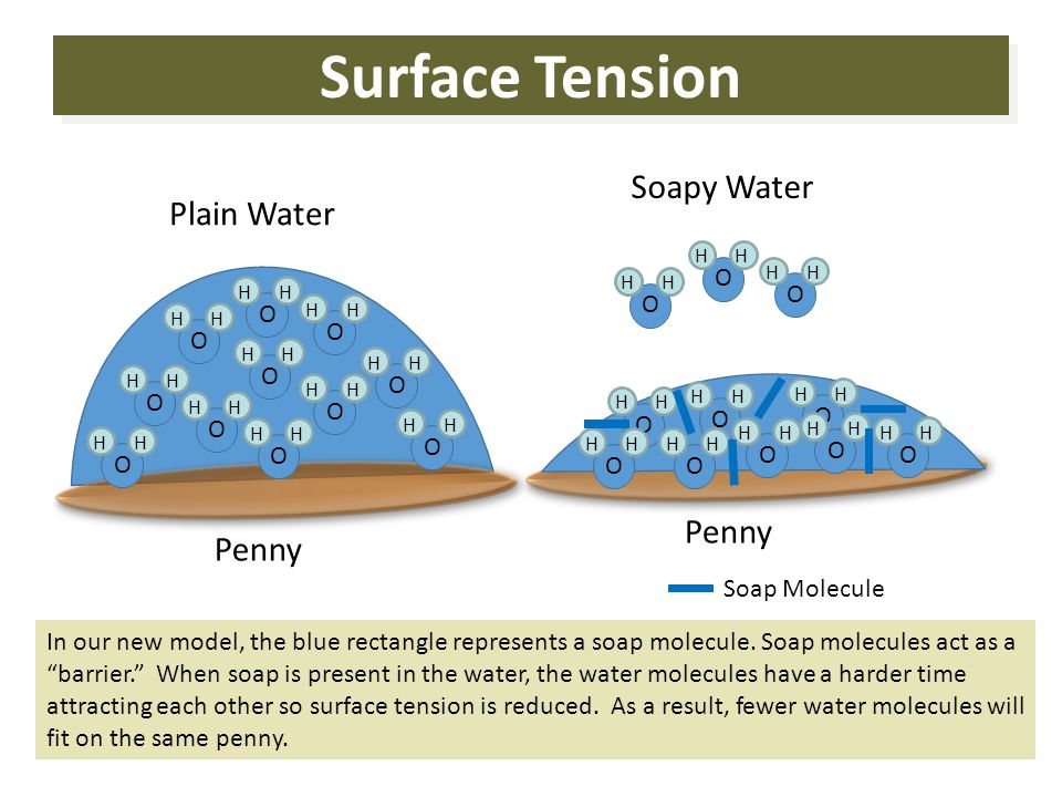 Why does water have surface tension?