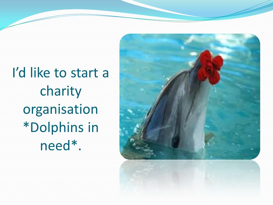 I'd like to start a charity organisation *Dolphins in need*.