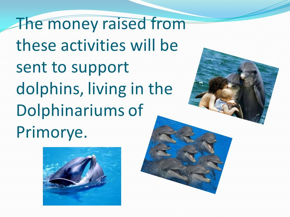 The money raised from these activities will be sent to support dolphins, living in the Dolphinariums of Primorye.