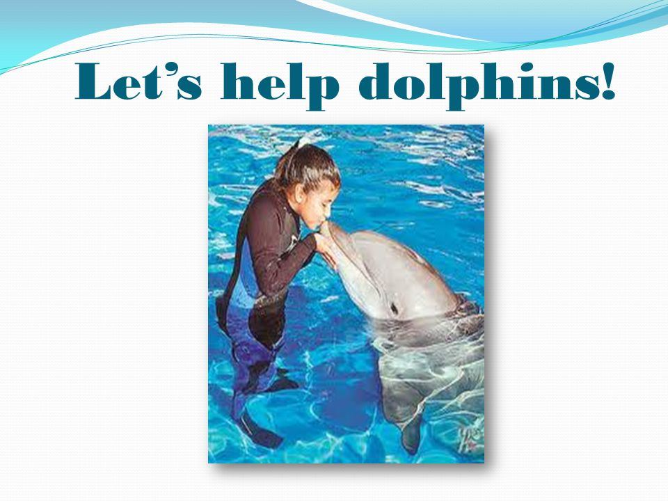 Let's help dolphins!