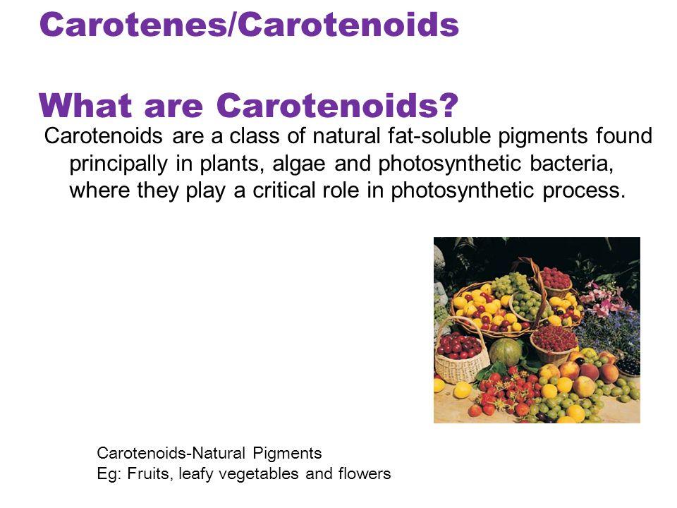 role of alkaloids in plants pdf