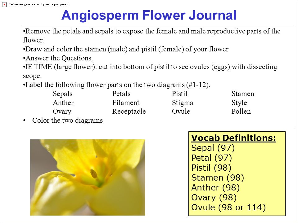 angiosperm questions Lab 01 ‐ introduction & the basal angiosperm grade  organism by guiding you through a set of nested observations or questions about what the organism.