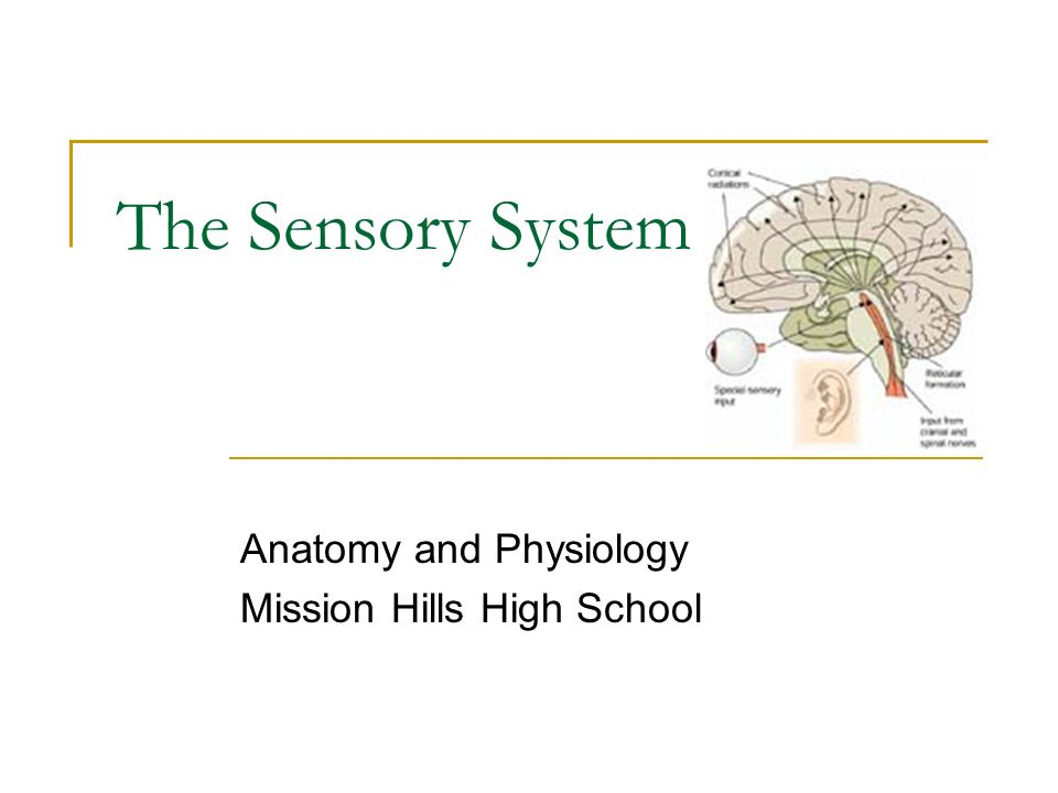 Anatomy and Physiology Mission Hills High School - ppt download