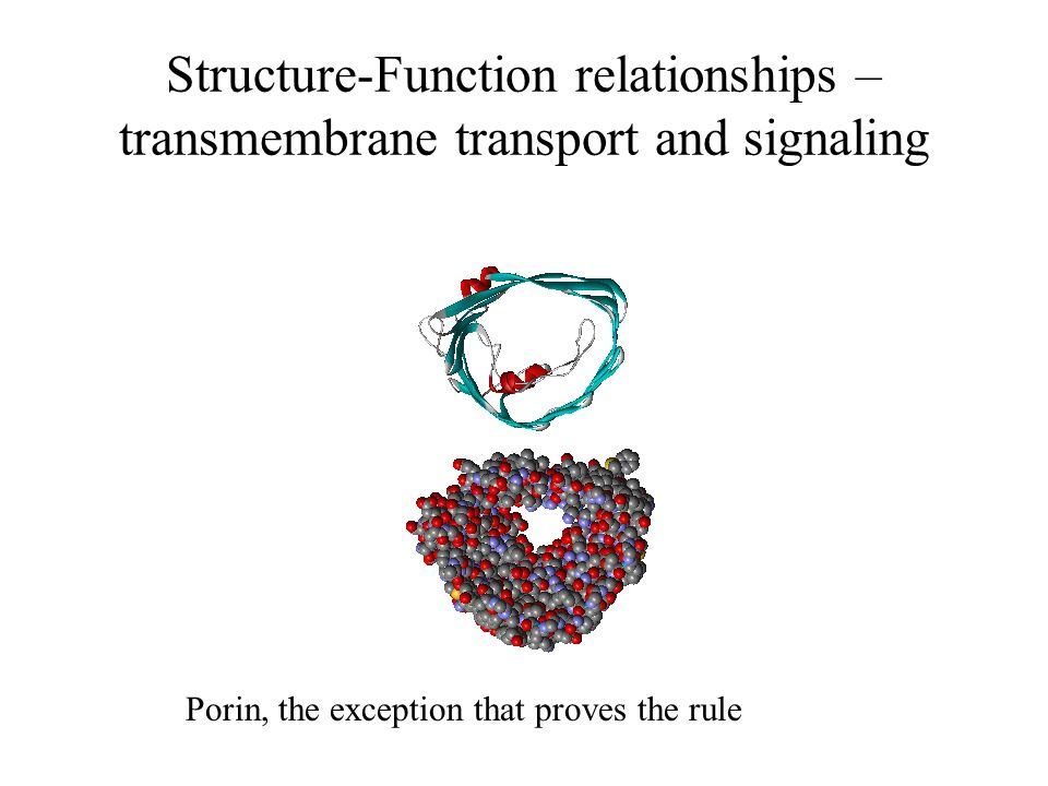 the structure and function relationships of The function of these molecules is determined by their shape as well as their composition,  a social structure is a pattern of relationships.