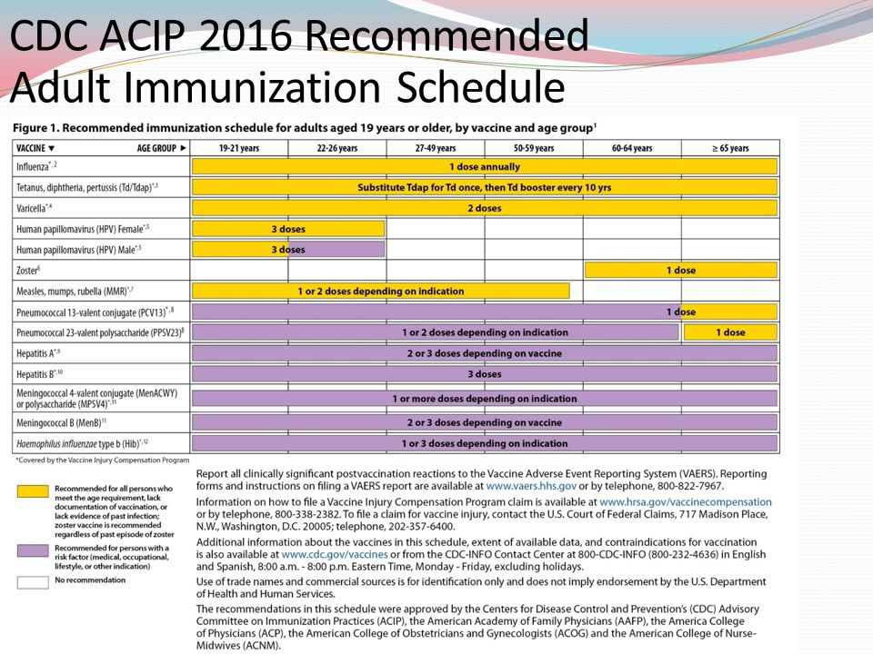 acip adult immunization schedule