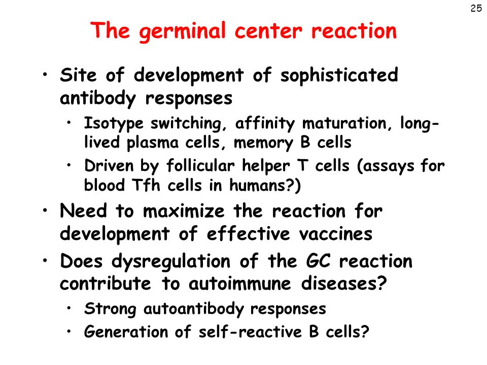 B Cell Activation Germinal Center B Cell Activation Abul...