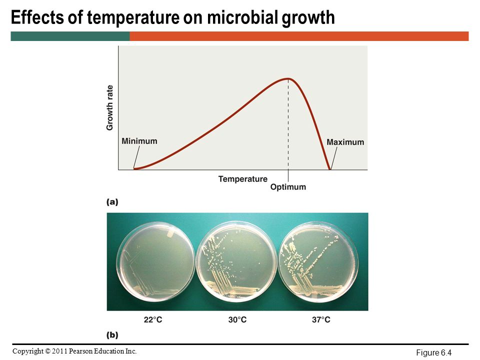 effect of temperature on microbial growth Summary: the effect of temperature on the growth of bact coli under accurately   the food addition the bacterial counts have therefore been corrected for the.