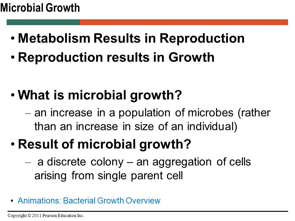 An overview of bacterial growth
