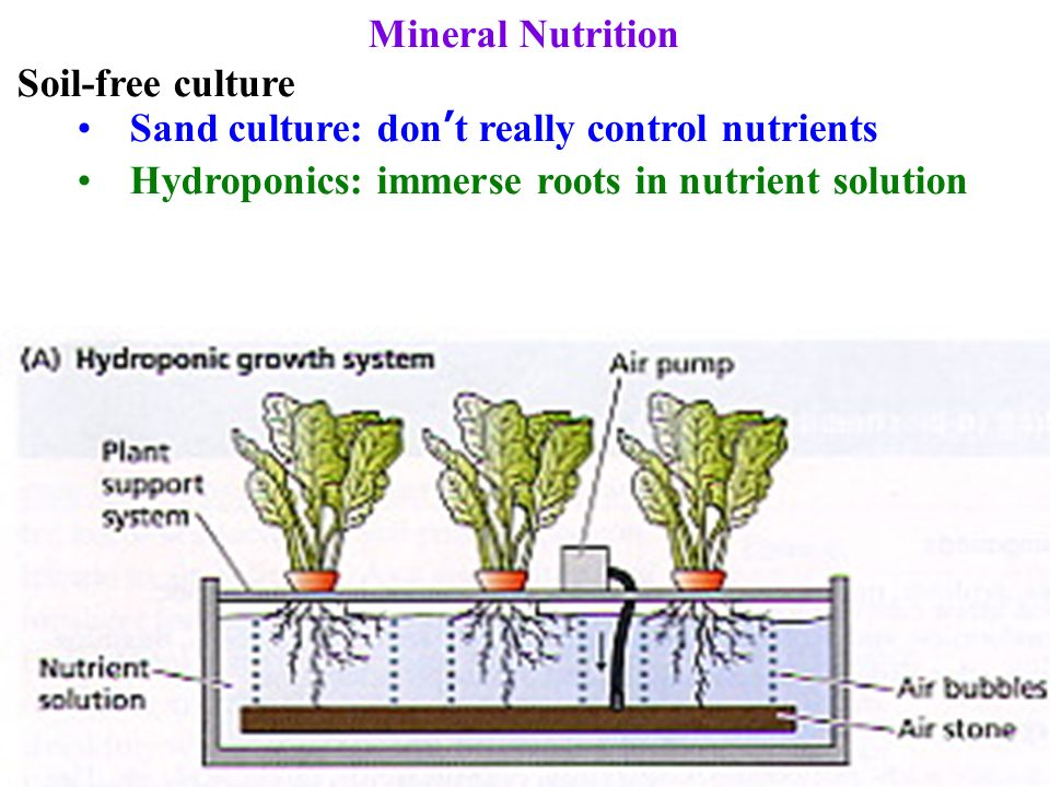 Mineral nutrition studied by soil free culture in nutrient for Soil nutrients