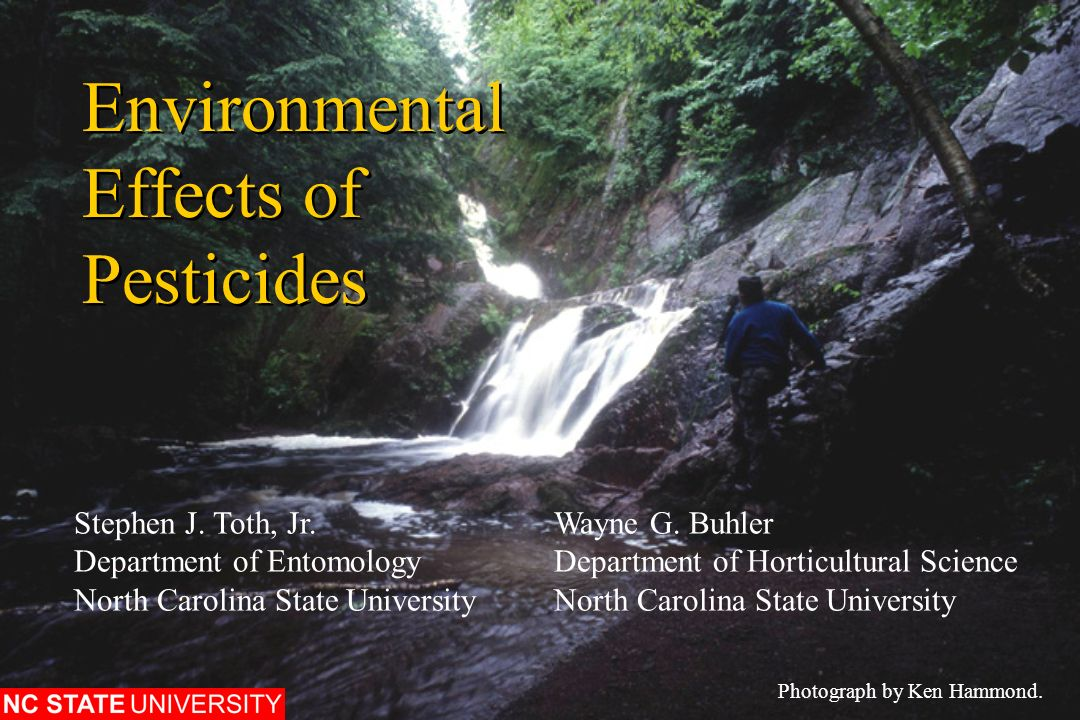 effect of ddt on the environment Rachel carson was the first to warn that ddt effects include accumulation in the environment, leading to banning paul offit asks if it was worth it.