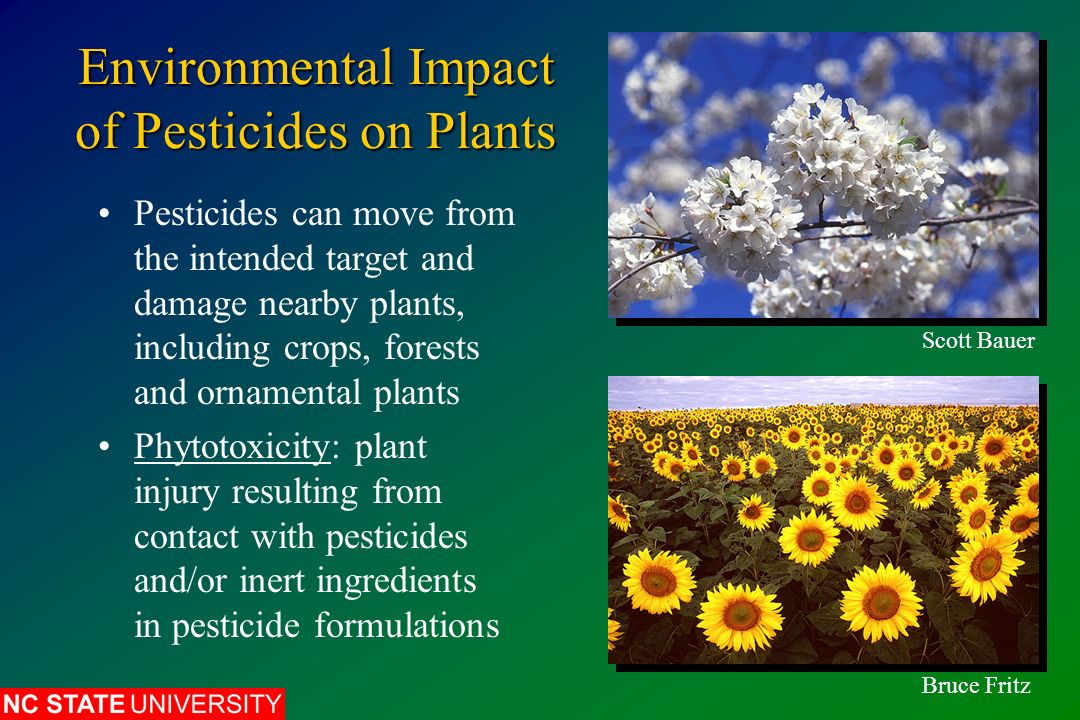 environmental effects of pesticides essay Although pesticides are intended to harm only the target pest, if not used correctly , they can also harm people or the environment the presence of a pesticide in.