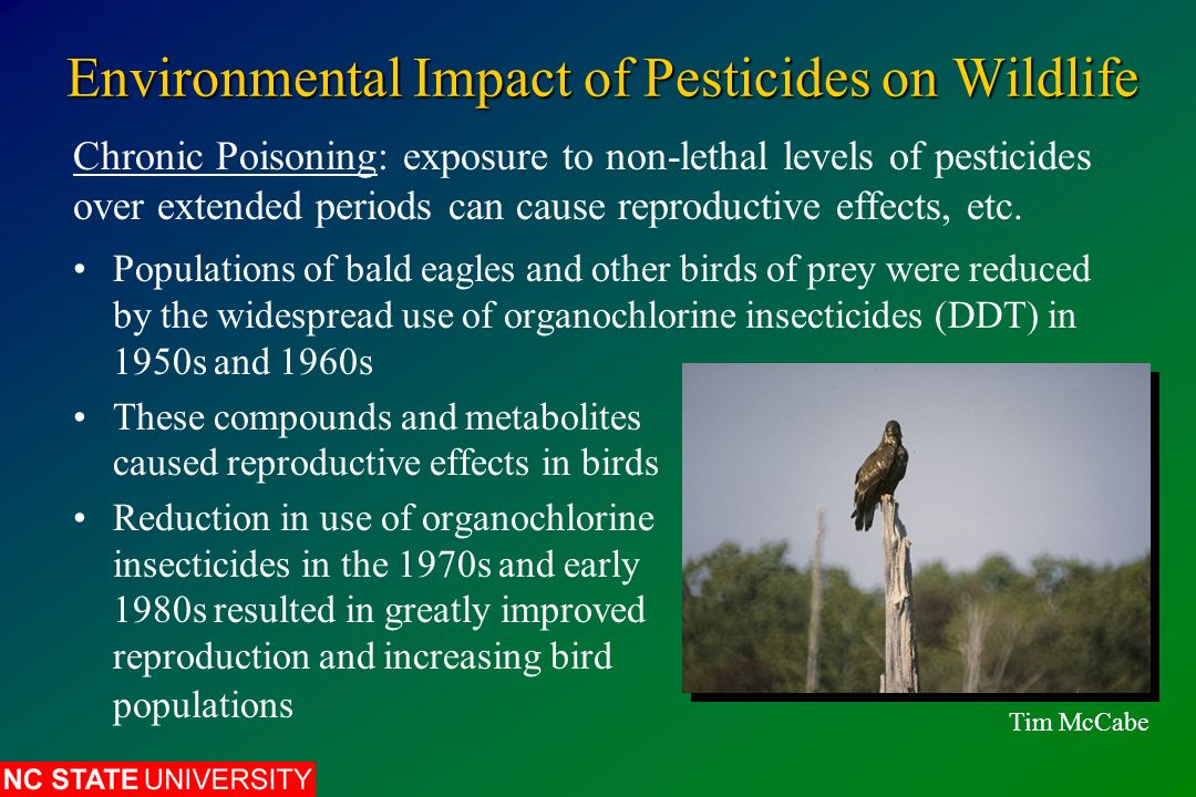 environmental effects of pesticides Agricultural practices such as pesticides, antibiotics from fertilizers, and  herbicides have serious environmental impacts in aquatic ecosystems.