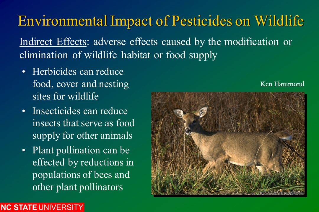 pesticides and effects The use of chemical pesticides has other, often hidden effects in addition to killing good bugs that help keep garden pests in check the very soil microbes that help prevent disease and make it easier for plants to utilize nitrogen and other nutrients are destroyed.