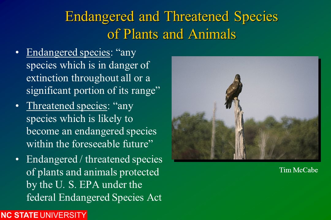 environmental effects when species become extinct Animal extinction essay: why we should  have become extinct, the environmental dangers  is that many species that have become extinct are.