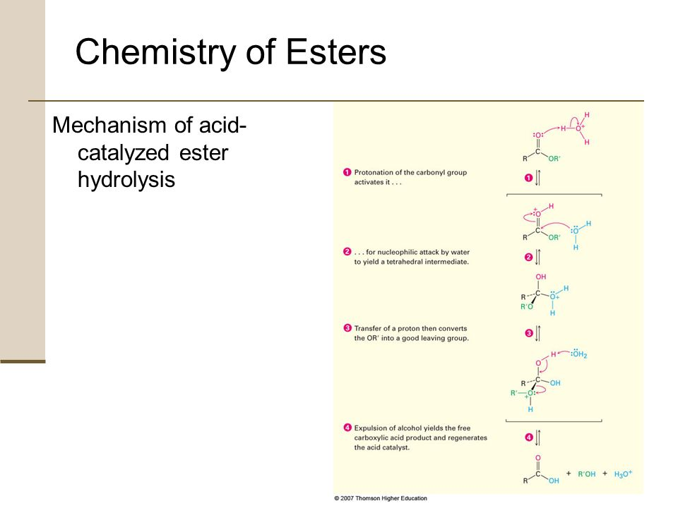 hydrolysis of esters acid mechanism If nuc-h is water the reaction is often called hydrolysis, if nuc–h is an alcohol the   reactivity: acyl halides  anhydrides  esters ≈ acids  amides  clearly,  the mechanism by which acylation reactions occur must be different from the.