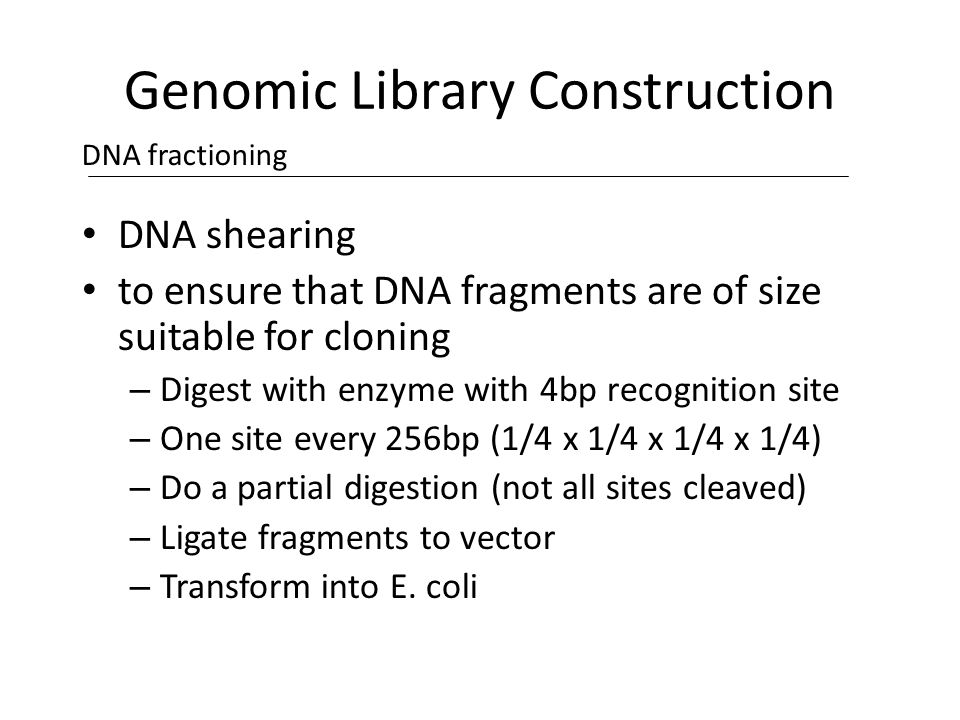 genomic library construction - photo #29
