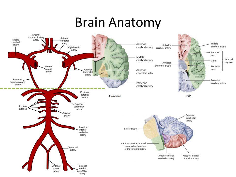 Posterior circulation anatomy 2687404 - follow4more.info