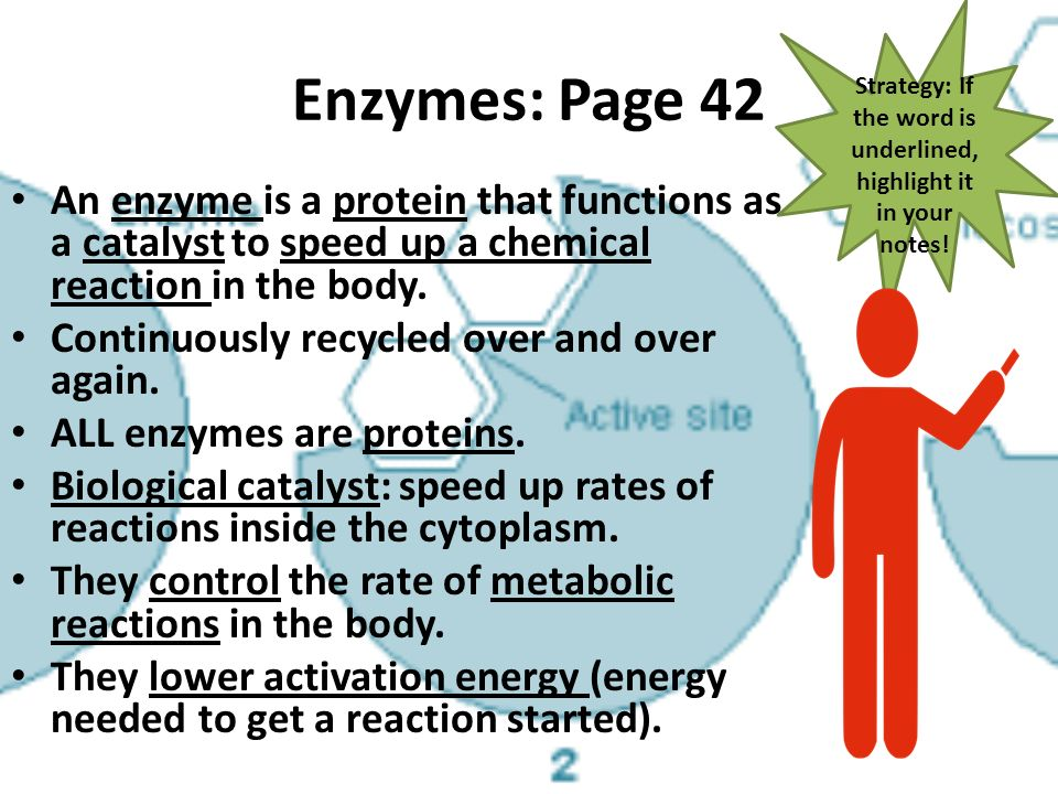 how to reduce 5ar enzime in your body enzymes biology ppt