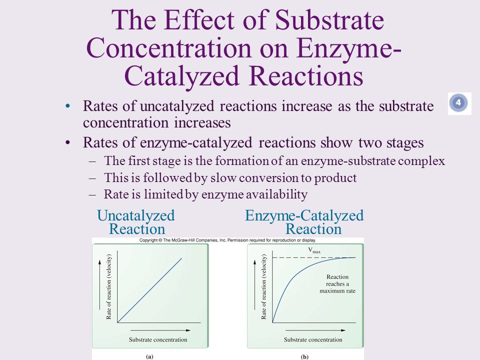 the effect of substrate concentration enzyme Substrate concentration it has been shown experimentally that if the amount of the enzyme is kept constant and the substrate concentration is then gradually increased, the reaction velocity will increase until it reaches a maximum.