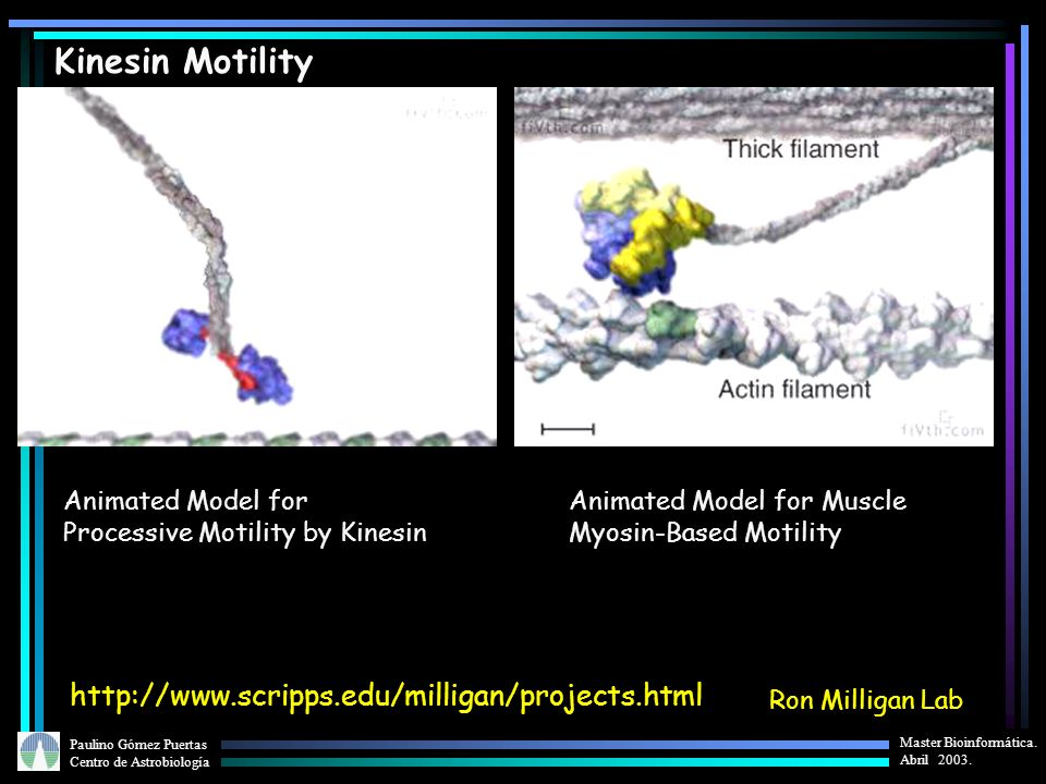 Kinesin Motility http://www.scripps.edu/milligan/projects.html