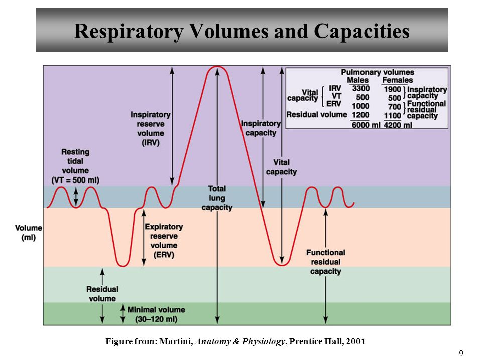 lung capacities and the anatomy and The following terms describe the various lung (respiratory) volumes: the tidal  volume (tv)  such air is located in the anatomical dead space within bronchi  and.