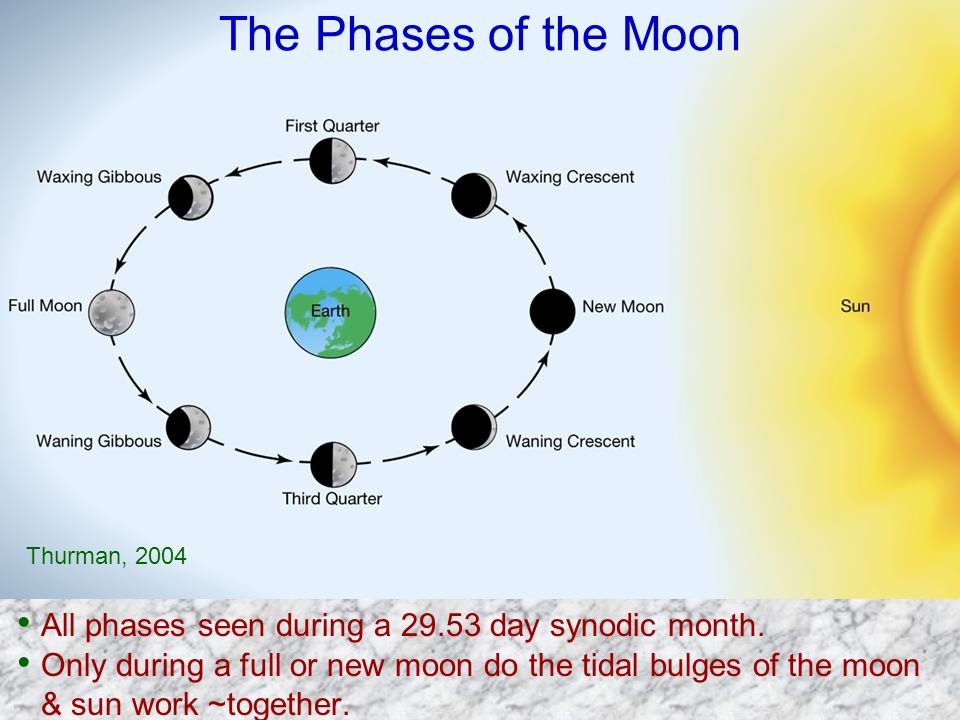 The Phases of the Moon Thurman, 2004. All phases seen during a 29.53 day synodic month.