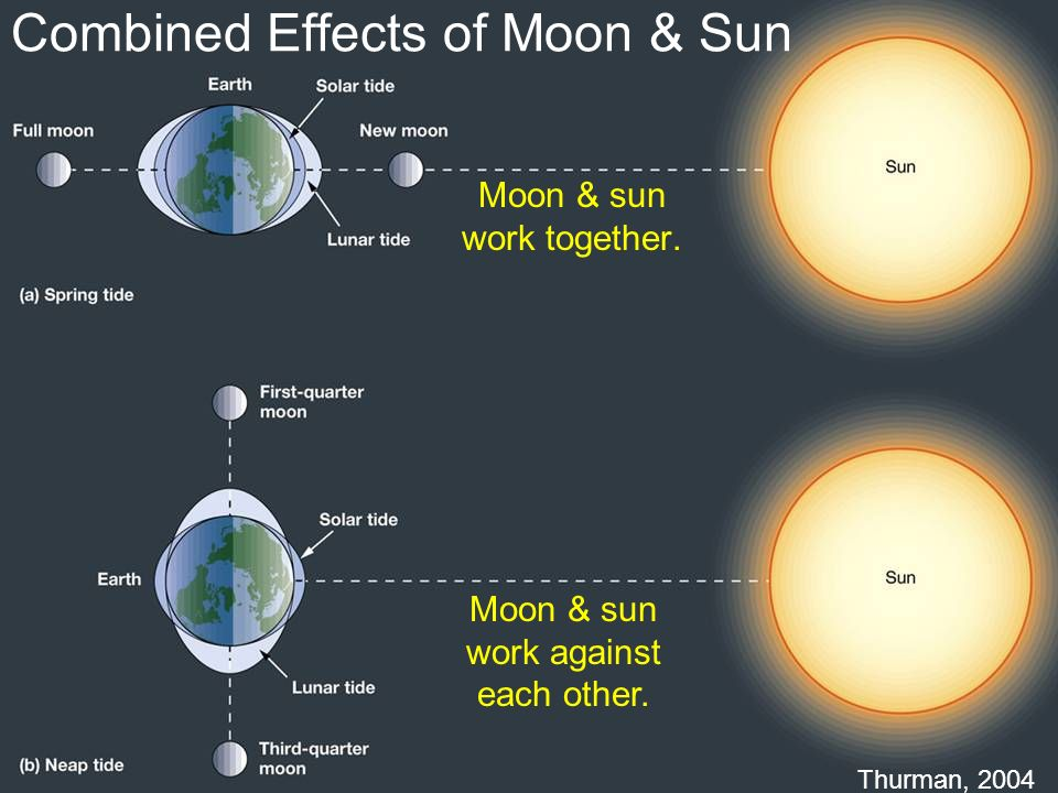 Combined Effects of Moon & Sun