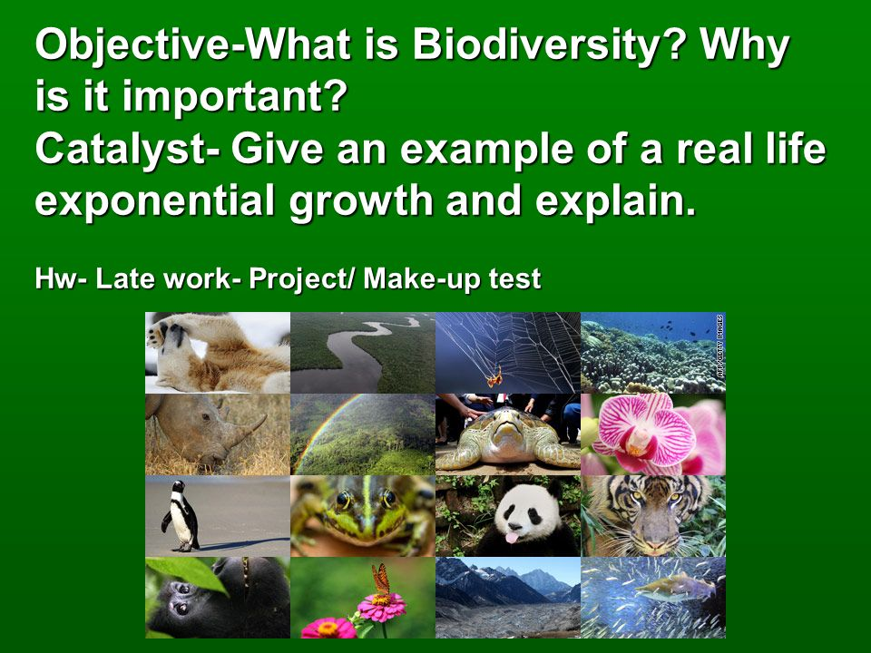 Objective What Is Biodiversity Why Is It Important Ppt Video
