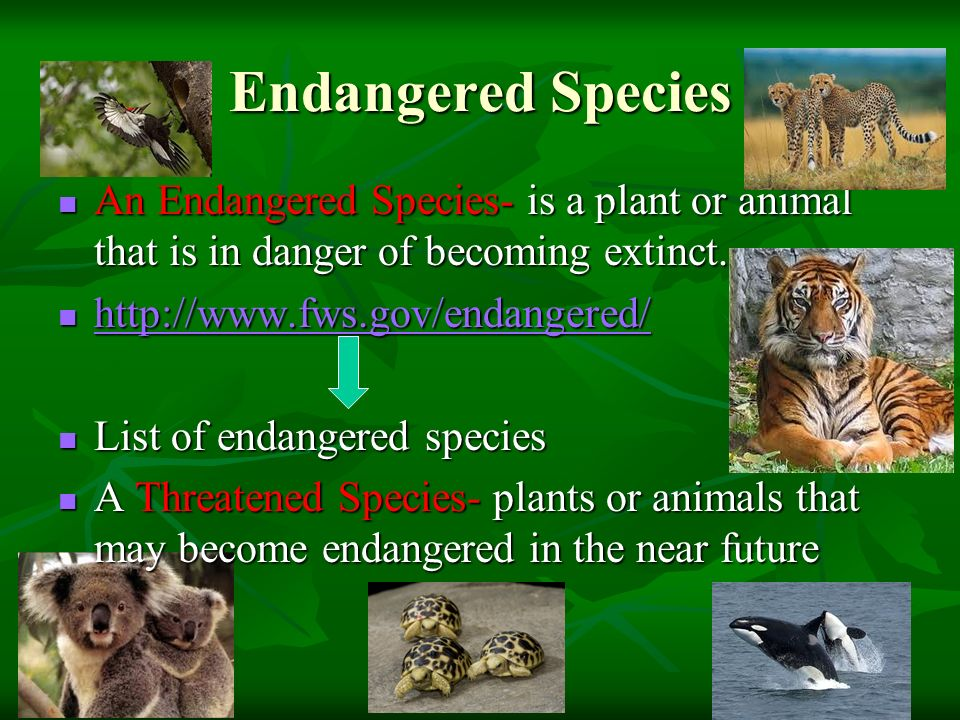 plant and animal endangered species essay Forum for essay writing for ielts and toefl  however, large number of  animals and plants are threatened with extinction these days.