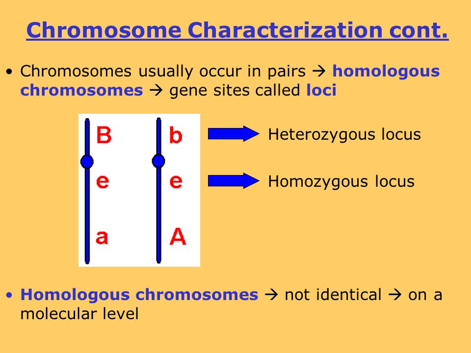 Chromosomes that are not sex chromosomes are called images 40