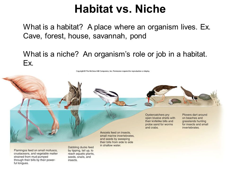 What Is Ecology A Branch Of Biology That Deals With The