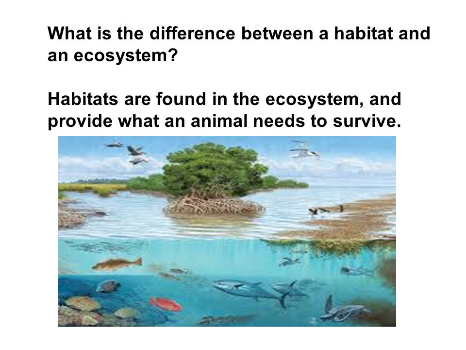 what is the difference between ecosystem The difference between a habitat and an ecosytem is that a habitat is a home to an animal and an ecosystem is an area where biotic and abiotic interactions take place .