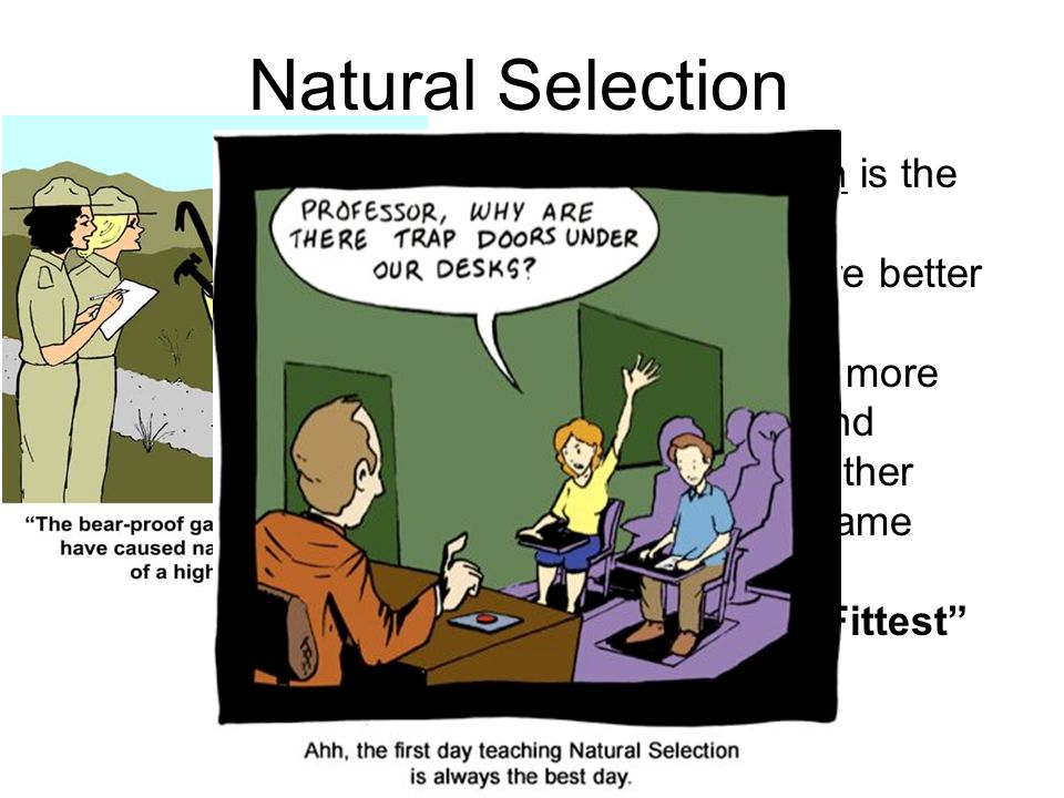 Is Natural Selection And Survival Of The Fittest The Same