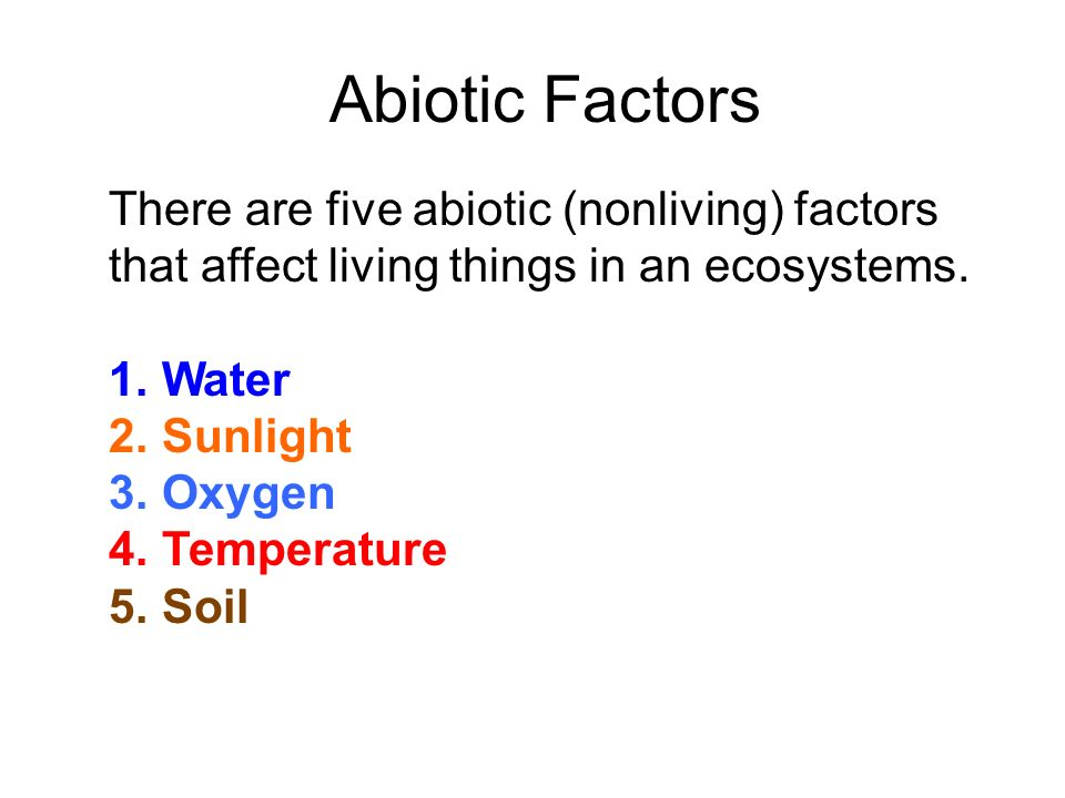 What is ecology a branch of biology that deals with the for Living things found in soil