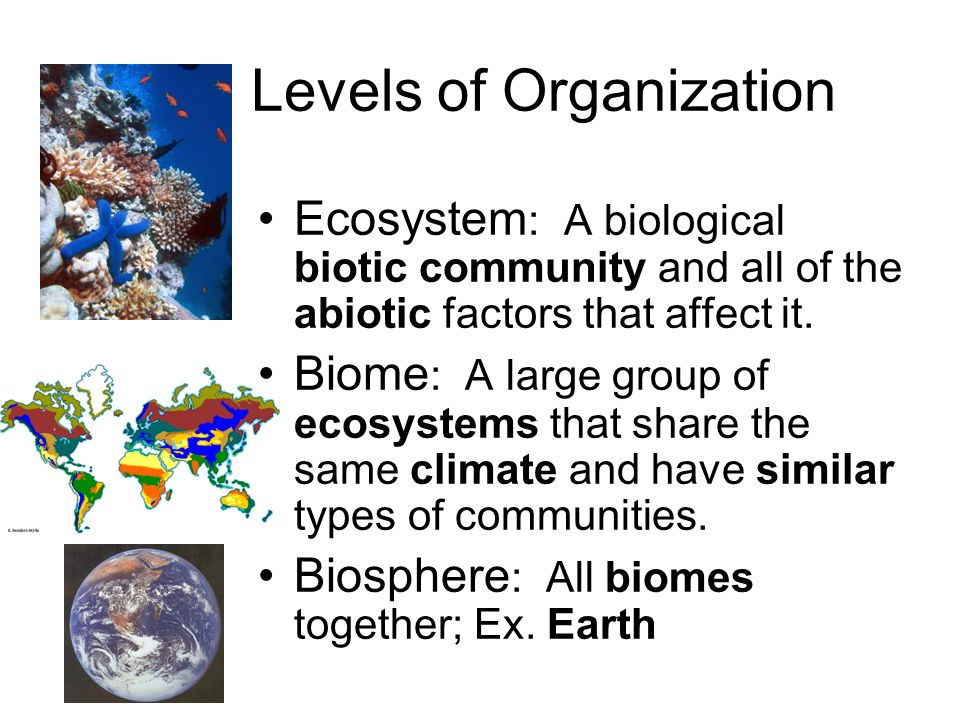 Exelent Print Biome Lesson For Kids Science Worksheets Biomes Quiz ...