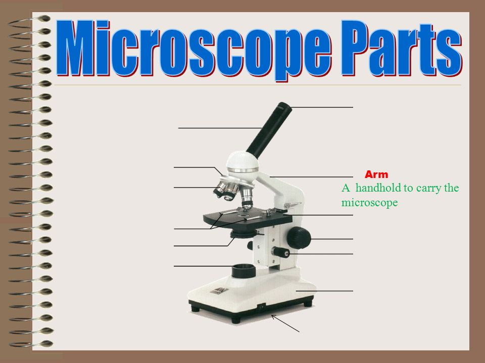 The Compound Light Microscope ppt download – Microscope Parts and Functions Worksheet