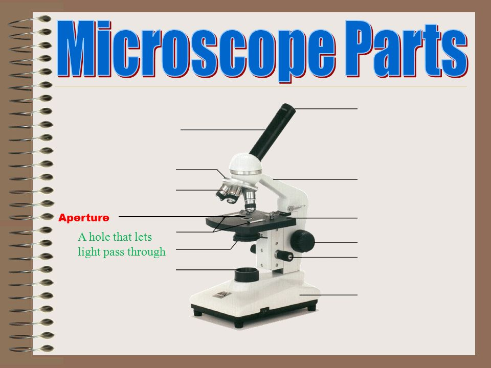 study microscope and ocular lens Start studying microscope learn vocabulary, terms, and more with flashcards, games, and other study tools.