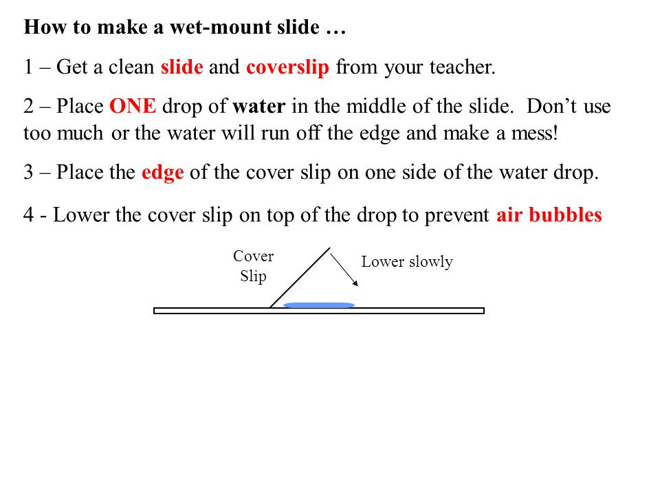 How to make a wet-mount slide …
